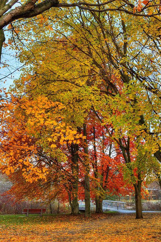 'Rainbow' of Leaves, University of #Waterloo, Ontario, #autumn