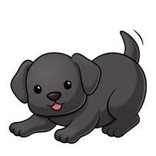 Cãozinho...