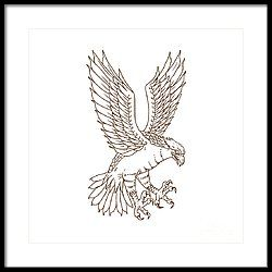 Osprey Swooping Drawing Framed Print by Aloysius Patrimonio