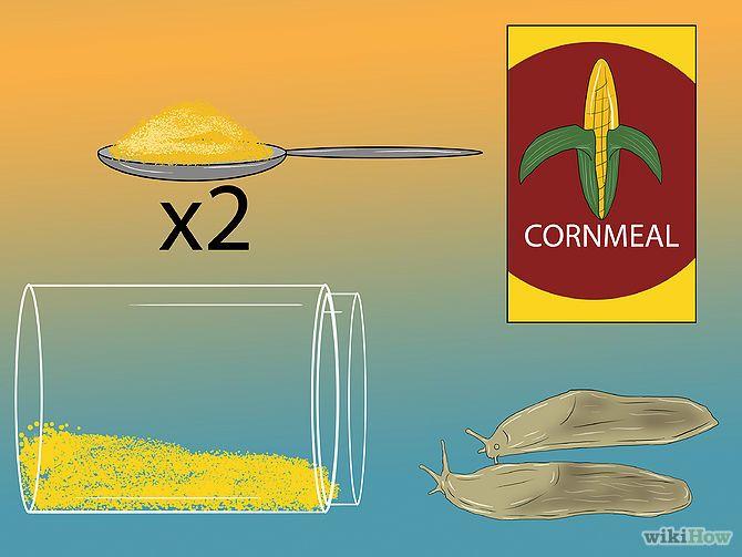 Inspirational  ways to get rid of slugs