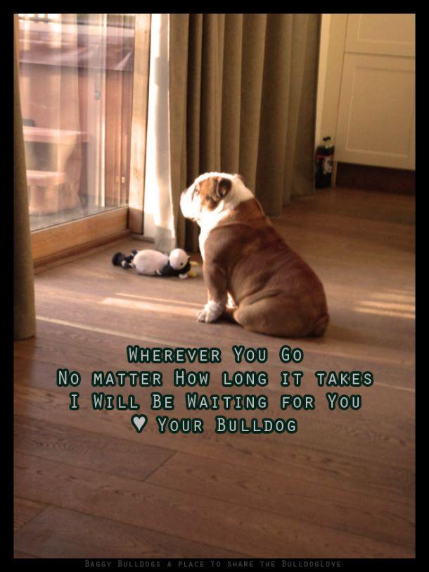 193 Best Bulldog Quotes Images On Pinterest Bulldog