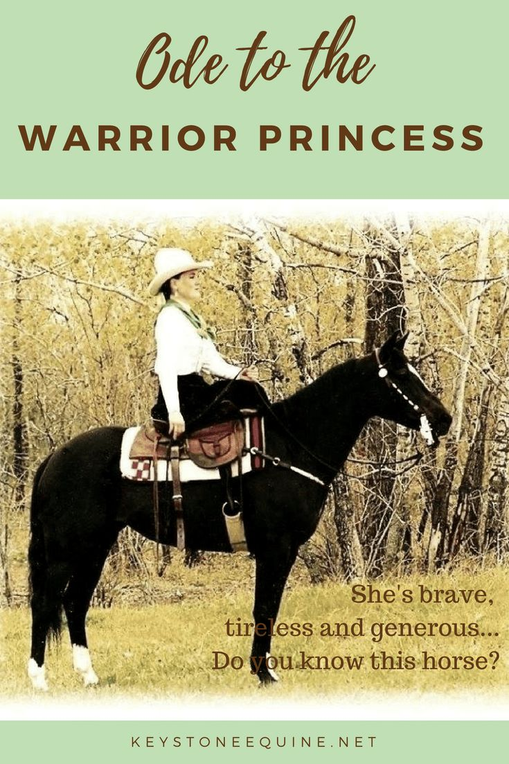 The warrior princess is brave, tireless, generous... Do you know this horse?