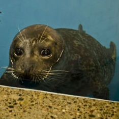 Feisty the seal