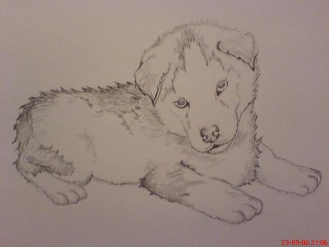Znalezione obrazy dla zapytania rysunki ołówkiem