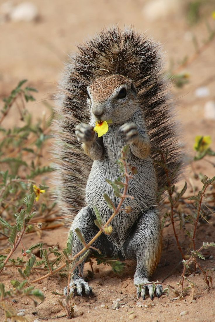 534 best squirrels images on pinterest squirrels animals and