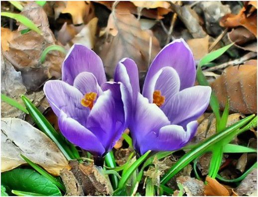 #wiosna #spring #kwiaty #flowers #color