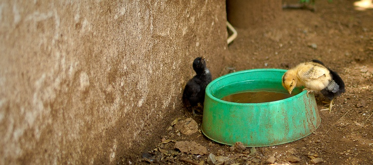 Photograph taken at Stonehaven on Vaal by Lynne Whelehan, Cute Chick.