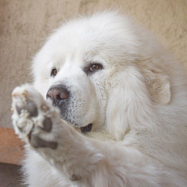 They hold out their paw for you to hold! Mine do that!