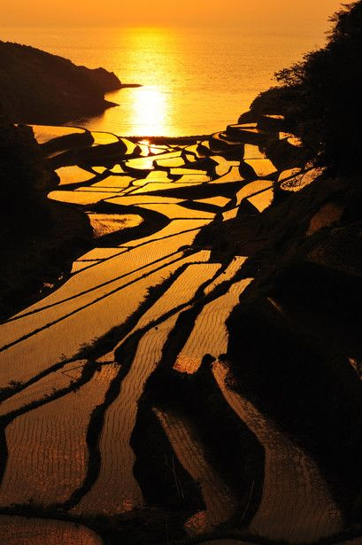 Sunset in terraced rice fields, Hamanoura, Genkai-cho, Saga, Japan
