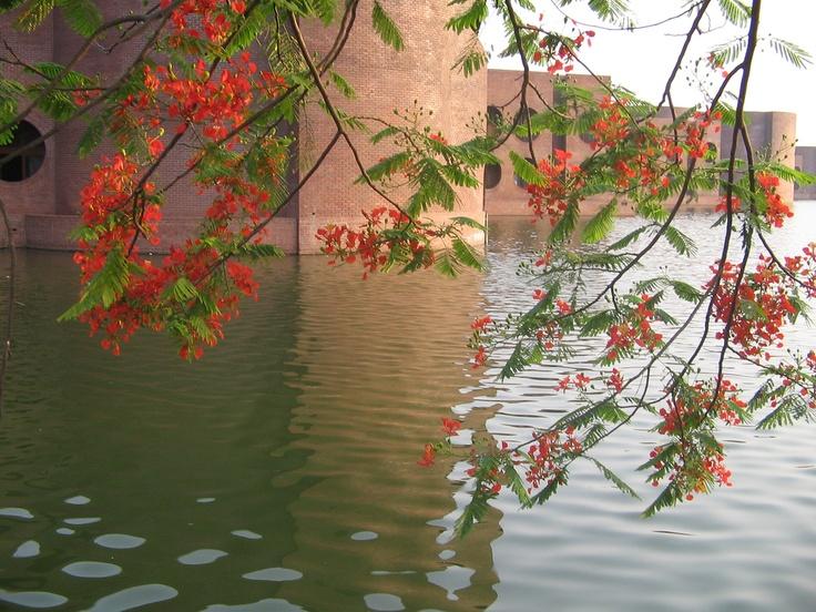 Sangshad Bhaban Grounds with Krishnachura Blooms- National Parliament House, Dhaka, Bangladesh