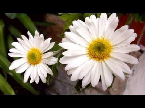 FLORES - Vals de las flores - Tchaikovsky