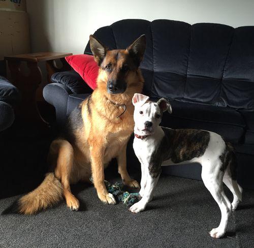 Bailey Dog and Saskia