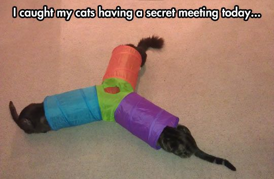 That is not so unusual for felines, dude. I swear, cats are evil, and part of being evil is having secret meetings sometimes. I would know, I'm evil too, but alas, I'm not as evil as a cat. Damn...