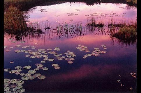 【夕陽、日落、Sunset】 端谷明巳写真展 尾瀬幸景「原の移ろい」   フジフイルムスクエア(FUJIFILM SQUARE)