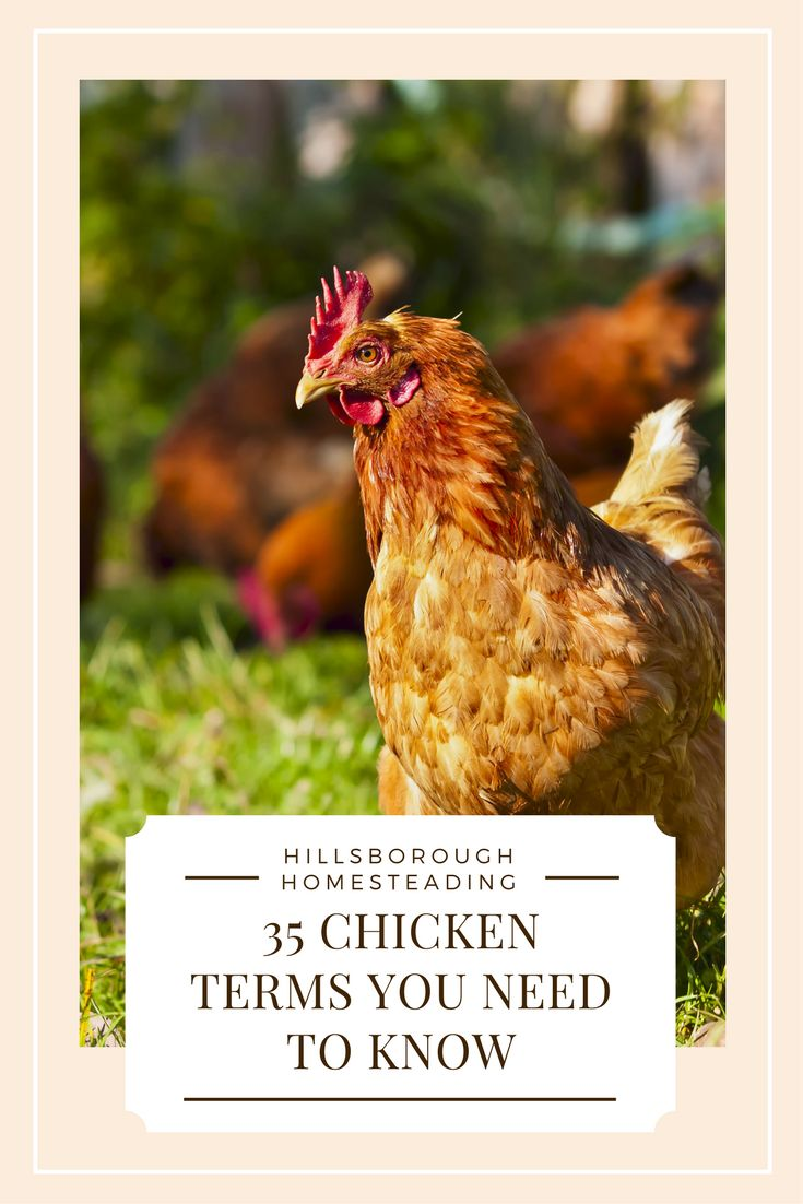 95 best chickens chicken coop design images on pinterest