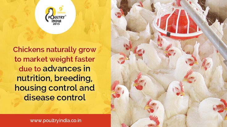 Come and meet international and national companies in nutritional feeds, breeding, disease control medicine and poultry farming equipments to gain knowledge about growing your poultry farm and making chicken's healthy.  Poultry India 2015 will exhibit many such Equipment Manufacturing, Pharma, Feed companies and also provide information to setup such automated plants.  Register today for FREE Visitor Pass @ www.poultryindia.co.in