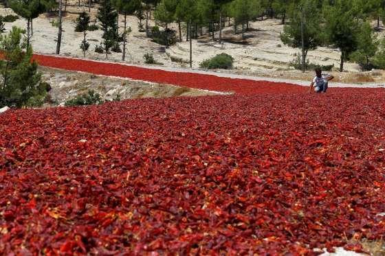 Kilis Province, Turkey - Umit Bektas/Reuters