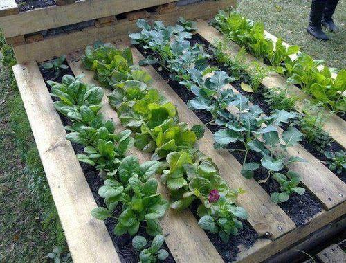 Cambio di casa per le fragole che hanno deciso di vivere o meglio piantare le proprie radici, in condomini e monolocali fuori dal solito campo o vaso.