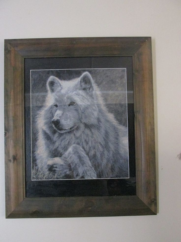 Spring Break - Wolf. This was framed a yr ago and I never really liked the white boarder the framers put in. I decided to paint it black over the weekend. Looks way better now