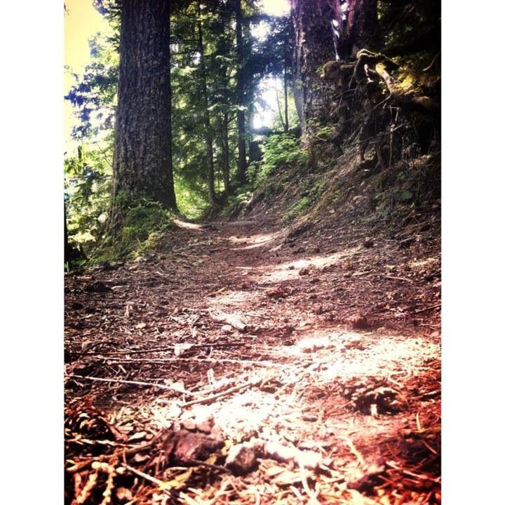 Packwood Washington 22 best Packwood images on