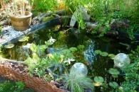 Ce bassin en résine a été construit en 2009. La filtration se fait par les plantes, une pompe et un filtre bio. On peut y voir des poissons rouges,