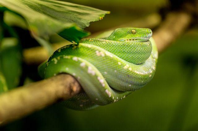 Free photo: Snake, Green, Macro, Animal, Zoo - Free Image on Pixabay - 1634293