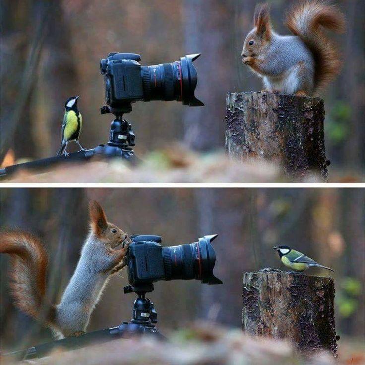❝ #FOTO - ¡Tómame una foto! ❞ ↪ Vía: proZesa