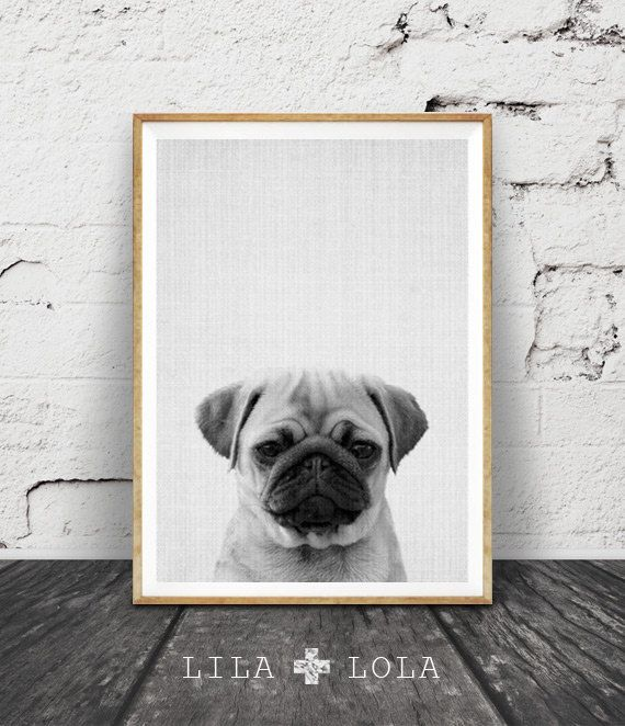 Pug Print, Pug Gift, Dog Print, Puppy, Modern Minimalist Black and White Animal Print, Printable Art, Pug Photo, Cute, Nursery Animal Print