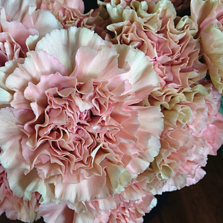 @fleetingbuds Dreamy mochas and dusty pink carnations