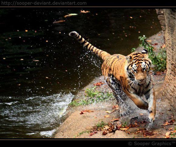 Schöne Tierfotografie von Sooper Deviant   – Beautiful Creatures