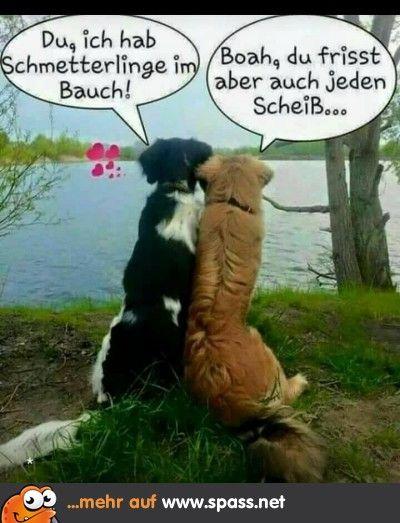 Tiere - Lustige Bilder auf Spass.net