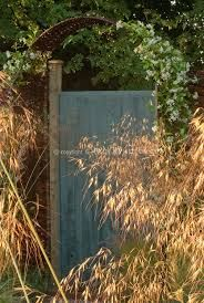 Autumnal light on Stipa gigantea- a statuesque plant which cannot be rivaled for drama.