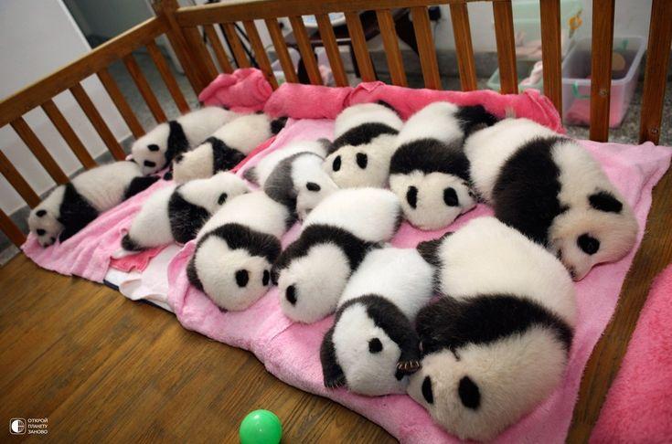 Царство лени - питомник панд - Путешествуем вместе