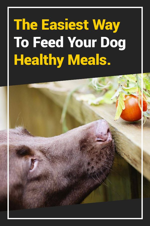 Why My Family Won't Feed Our Dogs Kibble Anymore