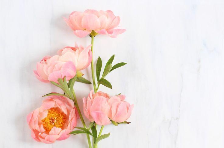 Digital Blooms June 2017 | Free Desktop Wallpapers | Design 2 // JustineCelina.com x Rebecca Dawn Design | FREE pink peony wallpaper