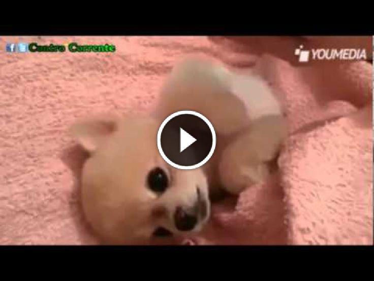 Video e immagini divertenti ogni giorno: Questo #cucciolo #adora le #coccole, guardate cosa fa...
