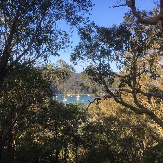 """Pittwater seen through the bush"" by Cath - £5"
