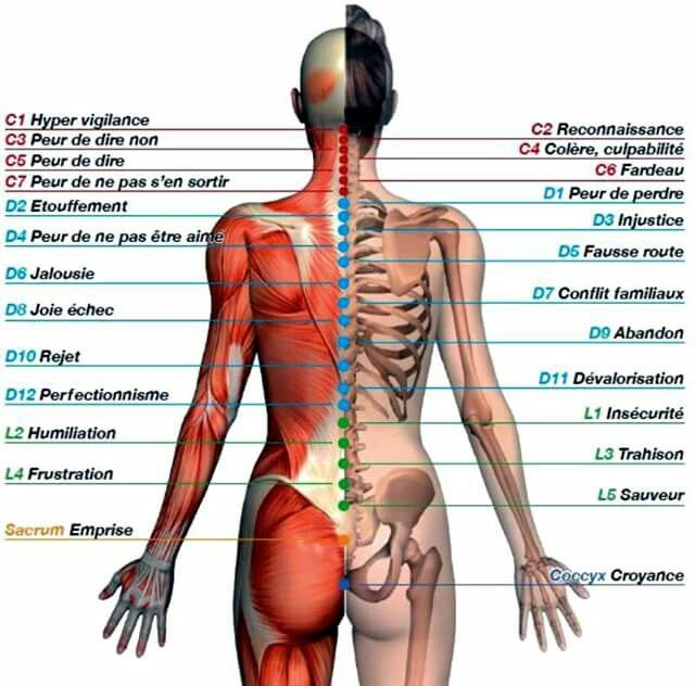 les maladies du corps humain pdf