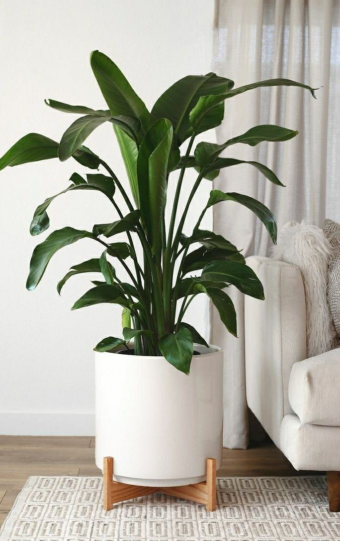 Pin On Interiors With Plants