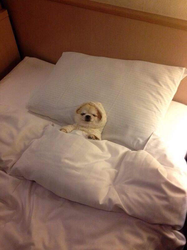 How I am sleeping tonight.