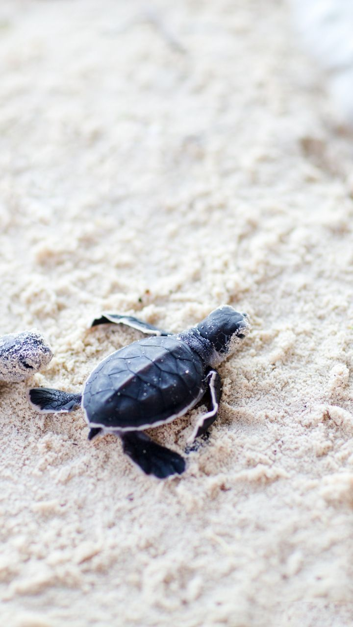 Cute, baby, turtles, sand, 720x1280 wallpaper