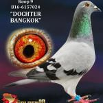 """009 - B16-6157024 """"DOCHTER BANGKOK"""" ♀   De Duif"""