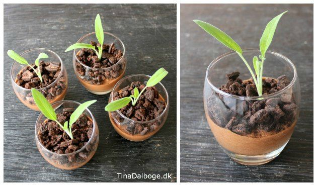 Opskrift på chokolademousse der ligner som potteplanter - med Oreos´… Flere opskrifter på Tina Dalbøges kreative blog her: www.TinaDalboge.dk
