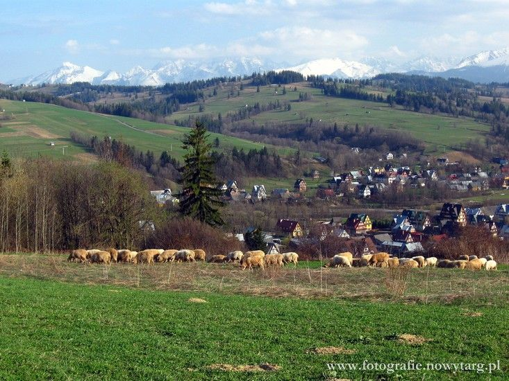 Sprawdź: http://puszystaowca.pl/wypas-owiec-jozefow/
