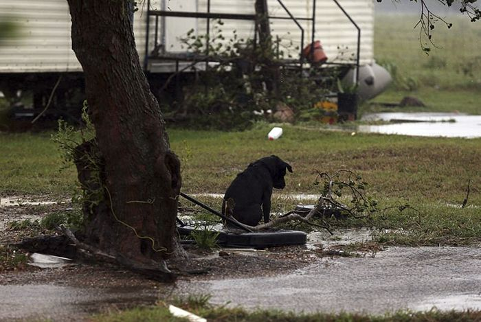 Some People Left Their Dogs Tied Up To Die In The Flood And It Will Break Your Heart | Bored Panda