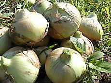 四季を感じる元気な野菜