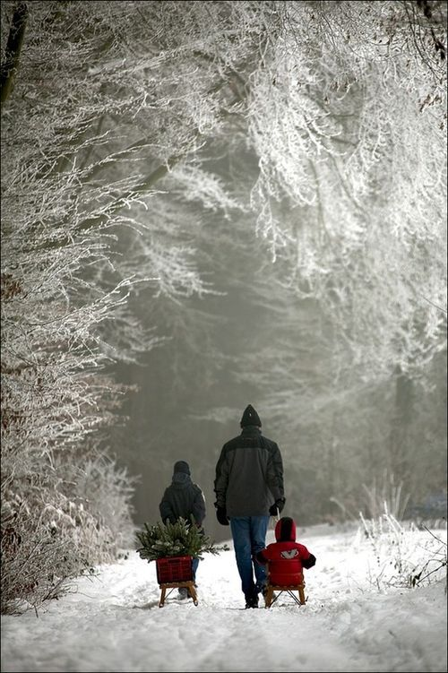 A family choosing a christmas tree from the forest / WINTER on imgfave