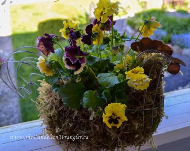 market treasures, container gardening, gardening, Get your funky chicken on with this farm chic planter