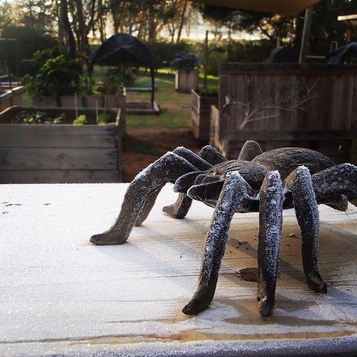 Our sentinel spider overseeing the veggie patch does nothing to deter Jack Frost ❄️ #bendigoweather #freshstart #frost #growyourown #olympusinspired #winterwonderland