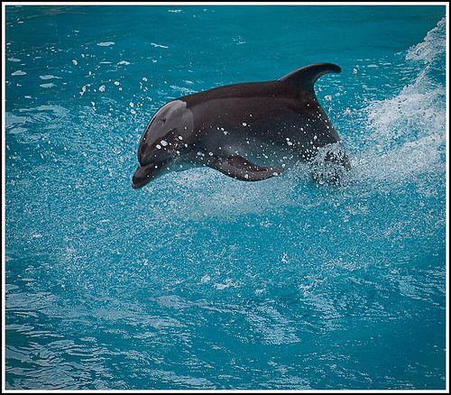 """Marc-marie Huijbregts: """"Dolfijnen verkrachten mensen""""."""